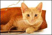 Cat--in-a-bag